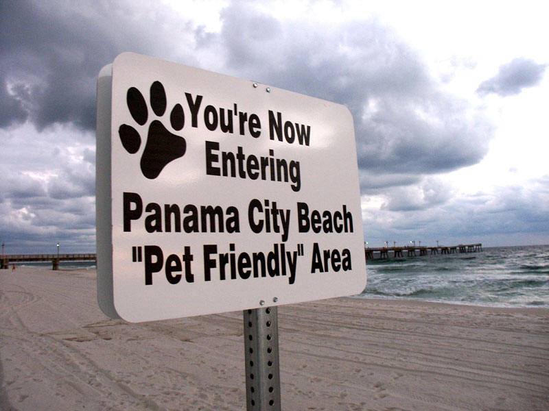 Where Can I Bring My Dog In Panama City Fl